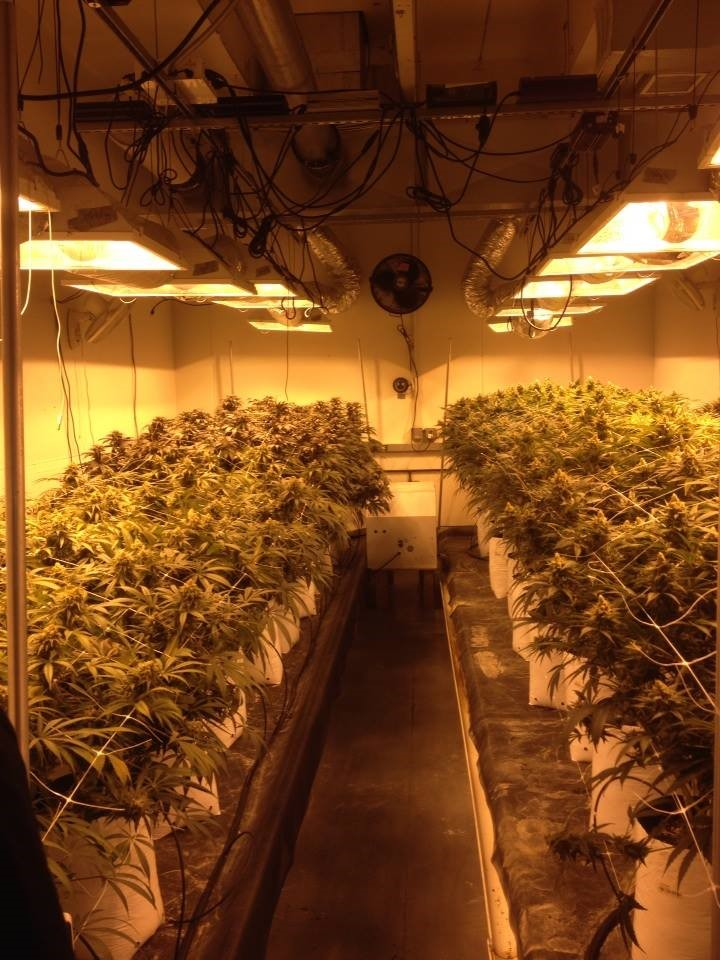 Denver Approves New Energy Efficiency Requirements for Indoor Agriculture/Cannabis Growing Facilities